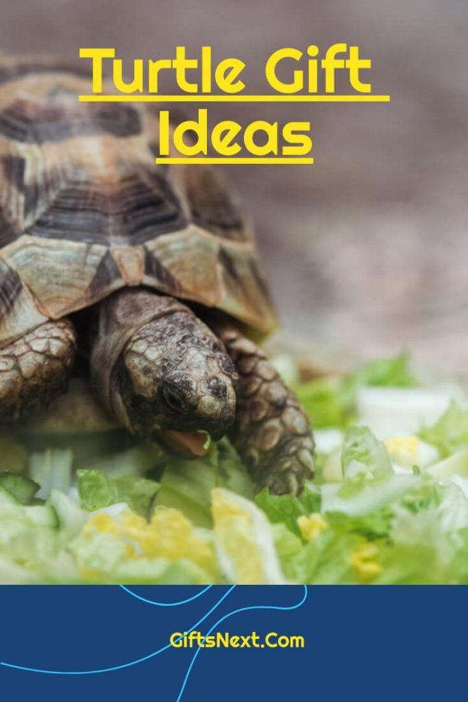 Turtle-Gift-Ideas